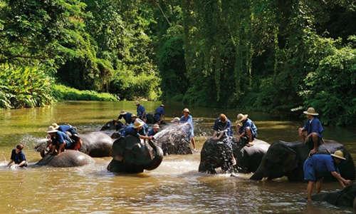"""Le """"tourisme animalier"""" est particulièrement développé à Chiang Mai"""