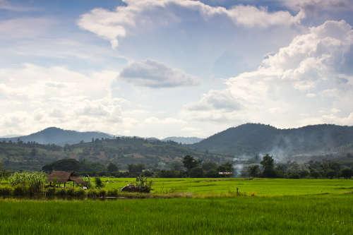 La campagne du cotée de Chiang Rai