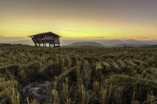 Des rizières dans la Province de Chiang Mai