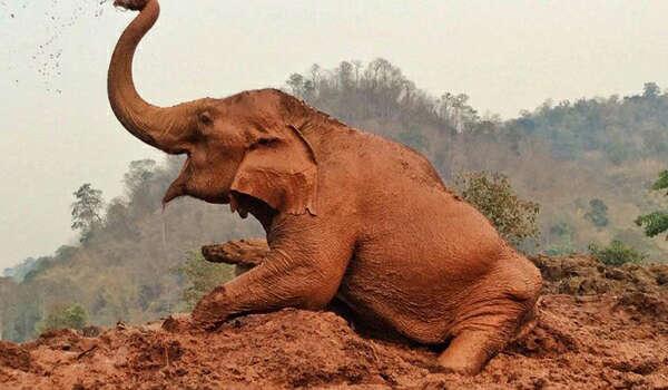 Medo - un des éléphants du Nature Park